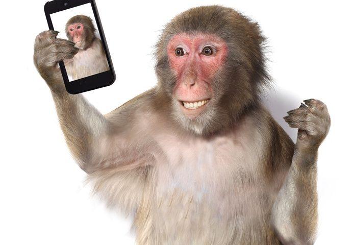 Affe macht ein Selfie